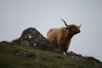 Bild zu Schottland