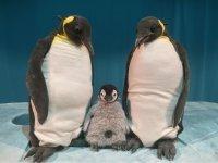 Kindertheaterreihe: Pit Pinguin
