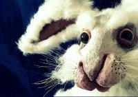 Bild zu Nürnberger Kindertheaterreihe: Hase und Igel