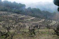 Bild zu Weinreise durch Europa: Weinland Spanien