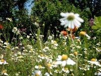 Bild zu Kräuterakademie Nürnberg: Heilpflanzen selbst ziehen
