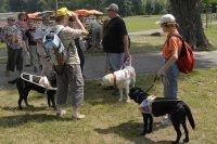Wie arbeiten Blindenführhunde?
