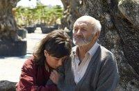 Bild zu Der Olivenbaum / El Olivo